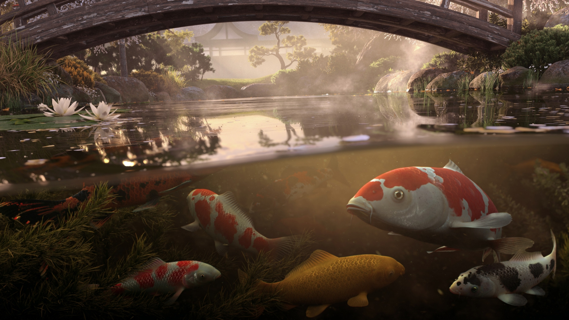 Koi Pond full 3d vfx